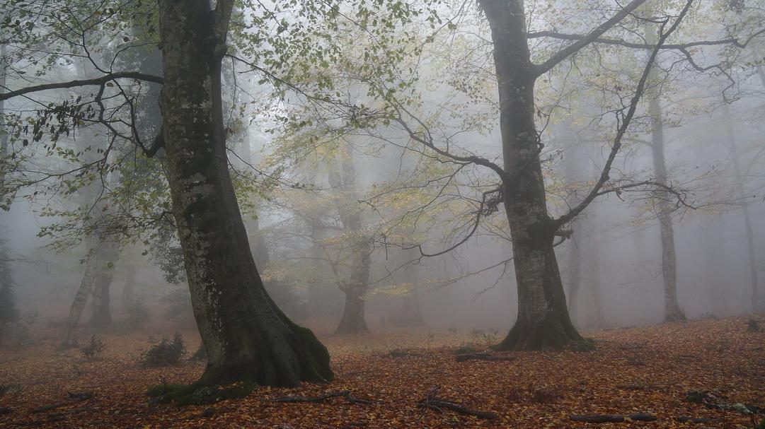 Foresta Umbra- Gargano