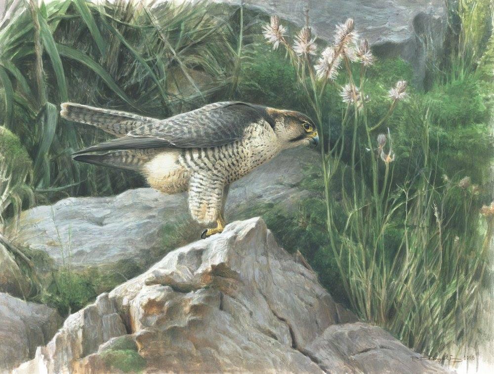 Lanner falcon - Paschalis Dougalis