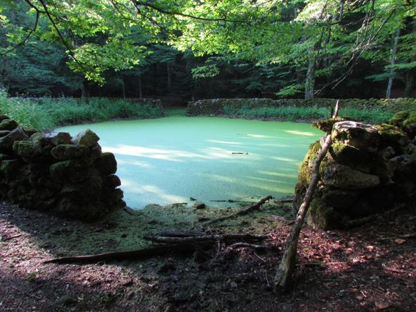 Lago d'Otri Foresta Umbra