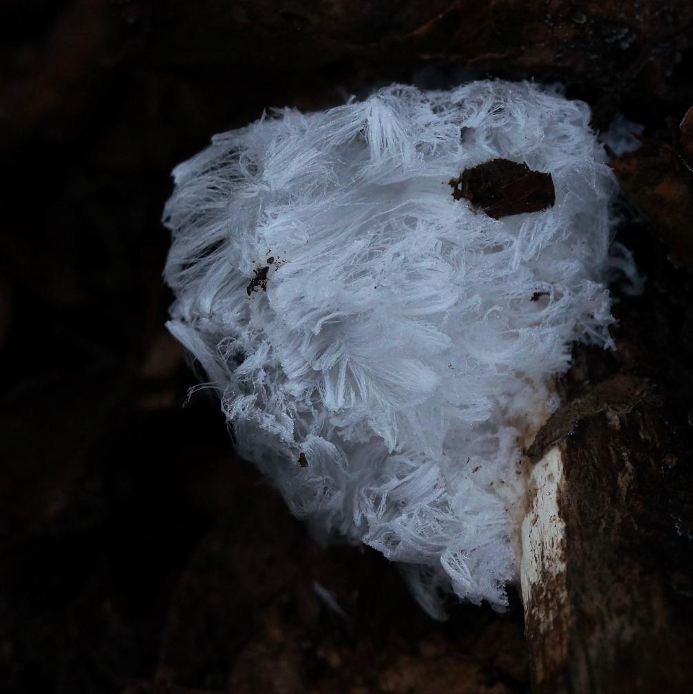 Capelli di ghiaccio